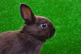 Close-up of rabbit — Stock Photo
