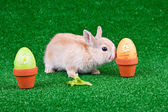 Bunny playing between easter eggs — Stock Photo