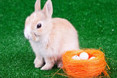 Easter bunny and nestle — Stock Photo