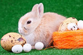 Rabbit and eggs — Stock Photo