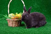 Ovos de páscoa no ninho e coelho negro — Foto Stock