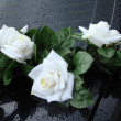 Foto Stock: White roses on black backgrownd