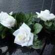 白玫瑰上黑色 backgrownd — 图库照片