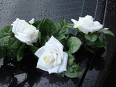 White roses on black backgrownd — Stock Photo