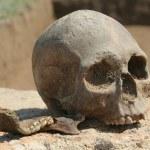 Human skull — Stock Photo #1810880