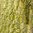 Stock Photo: Bark on old oak