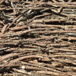 Stock Photo: Timber pine branches