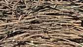 Timber pine branches — Stock Photo