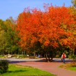 Autumn park — Stock Photo