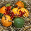 Pumpkin, cucurbita pepo — Stock Photo