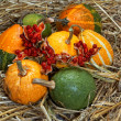 Pumpkin, cucurbita pepo - Stock Photo