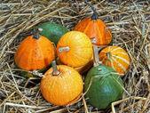 Pumpkin, cucurbita pepo — Stock Photo