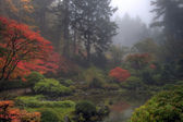 One Foggy Morning at Japanese Garden — Stock Photo