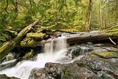 Panther Creek Falls — Stock Photo