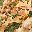 Fall leaves — Stock Photo #2034723