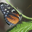 Butterfly closeup — Stock Photo #2034743
