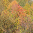 Stock Photo: Fall colors in the Smokies