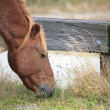 Brown horse head - Stockfoto