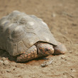Rock turtle - Stock Photo