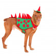 Doberman dinosaur — Stock Photo