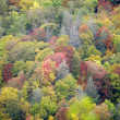 Fall colors in the Smokies — Stockfoto