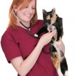 Nurse or veterinarian woman — Stockfoto