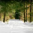 Snowy forest trail - Stock Photo