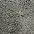 Stock Photo: Elephant skin texture