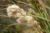 Closeup flora — Stock Photo