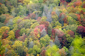 Fall colors in the Smokies — Stock Photo