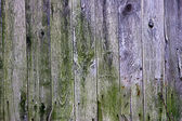 Rotting wood background — Stock Photo