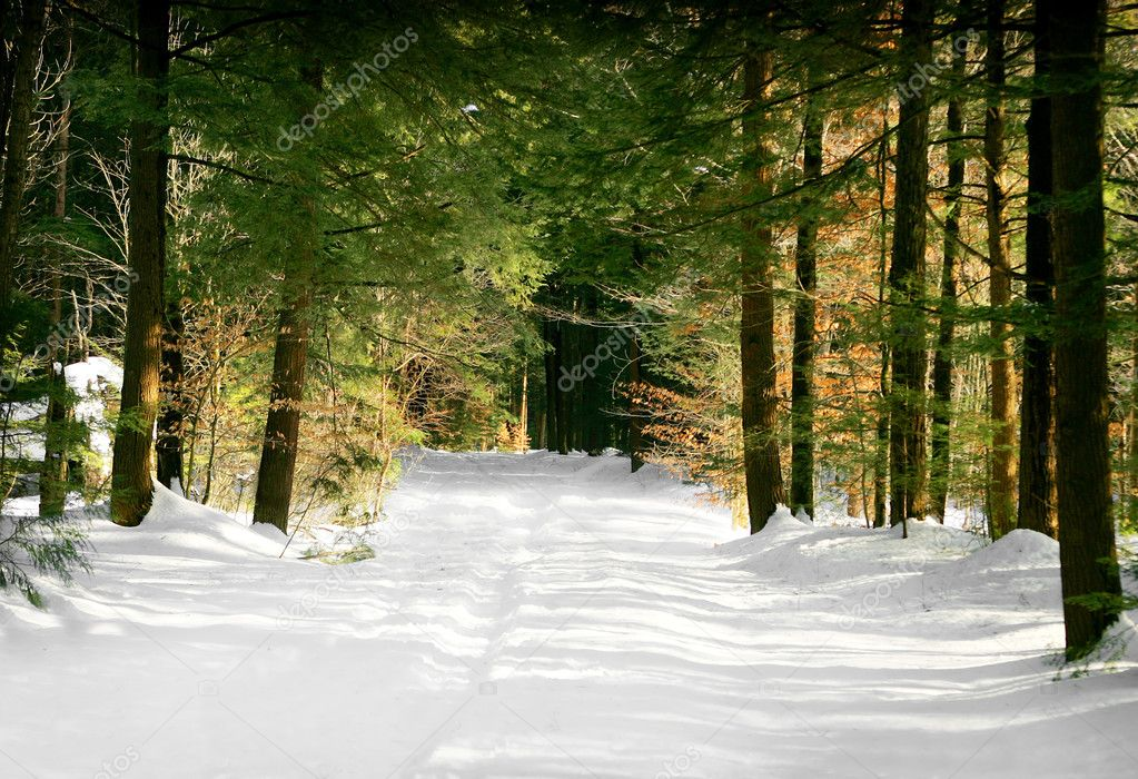 A path in the snowy woods leading from winter to spring — Stock Photo #2047945