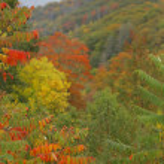 rökiga bergen bladverk — Stockfoto