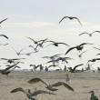 Flock of birds — Stock Photo #2176404