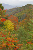 Smoky Mountains foliage — Stock Photo