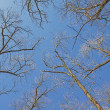 Bare branches of a tree canopy — Stock Photo