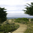 Stock Photo: Boardwalk between Monterey cypress