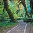 Foto Stock: Walkway in Olympic National Park