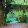 Stock Photo: Walkway in Olympic National Park