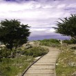 Boardwalk et monterey cypress — Photo