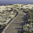 Boardwalk over sand dunes — Stock Photo #2665933