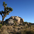 Joshua trees and rocks - Stockfoto