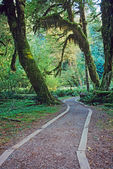Gehweg in olympic-nationalpark — Stockfoto