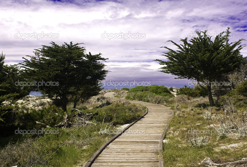 Boardwalk between Monterey cypress (Cupressus macrocarpa) on a dune at Asilomar State Park near Pacific Grove, California — ストック写真 #2663699