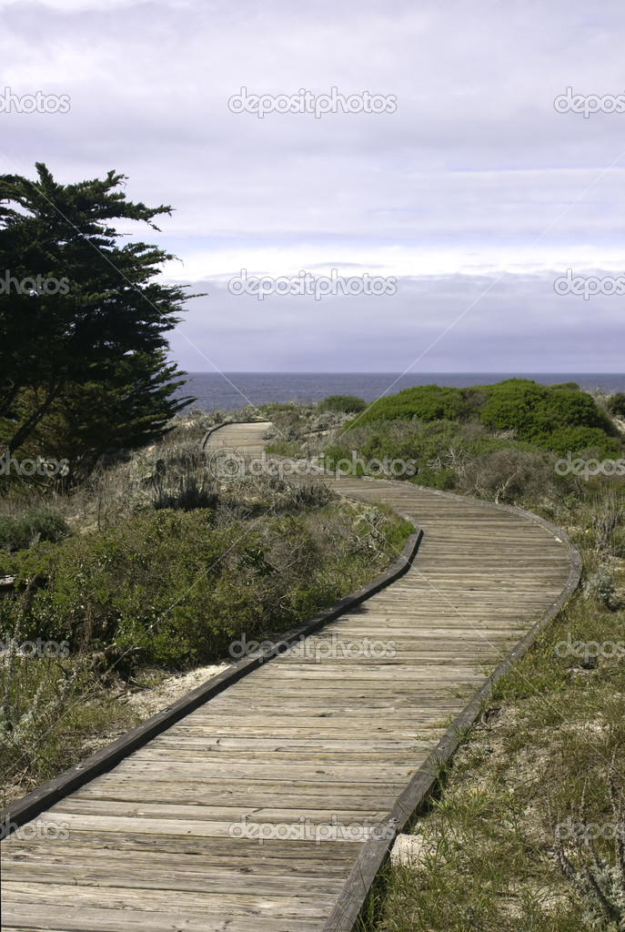 Boardwalk past a Monterey cypress (Cupressus macrocarpa) on a dune at Asilomar State Park near Pacific Grove, California — Photo #2663714