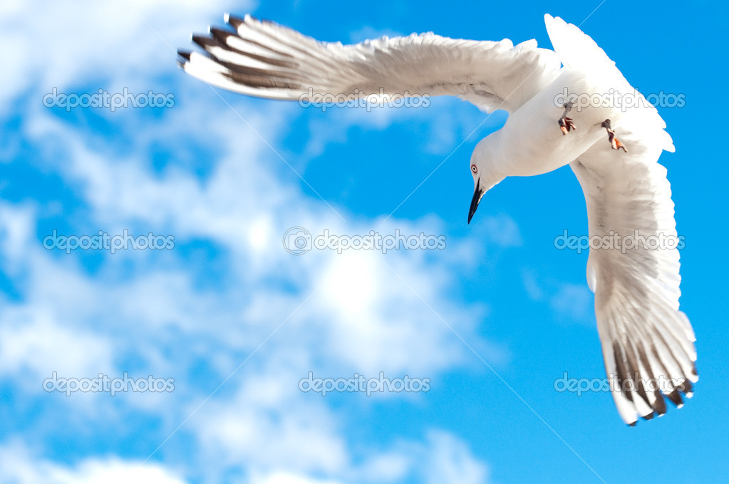 Seagull flying in the sky with wide open wings — Stock Photo #1816852
