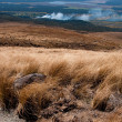 Volcanic terrain in New Zealand — Stock Photo