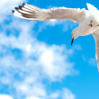 Seagull flying in the sky — Stock Photo #1857605
