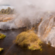 Pohutu Geyser Rotorua, NZ - Stock Photo