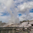 The Pohutu Geyser  in New Zealand — Stock Photo